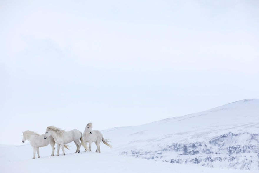 animal-photography-icelandic-horses-in-the-realm-of-legends-drew-doggett-26-5b5afc00cef9b__880