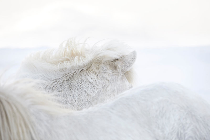 animal-photography-icelandic-horses-in-the-realm-of-legends-drew-doggett-3-5b5afbd280788__880
