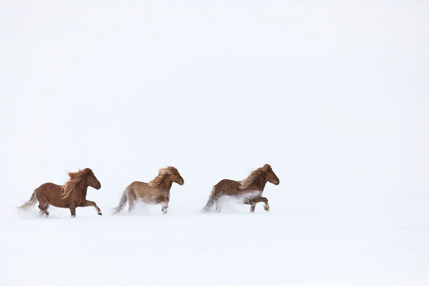 animal-photography-icelandic-horses-in-the-realm-of-legends-drew-doggett-35-5b5afc152e2bf__880