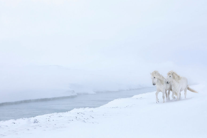 animal-photography-icelandic-horses-in-the-realm-of-legends-drew-doggett-4-5b5afbd45e718__880