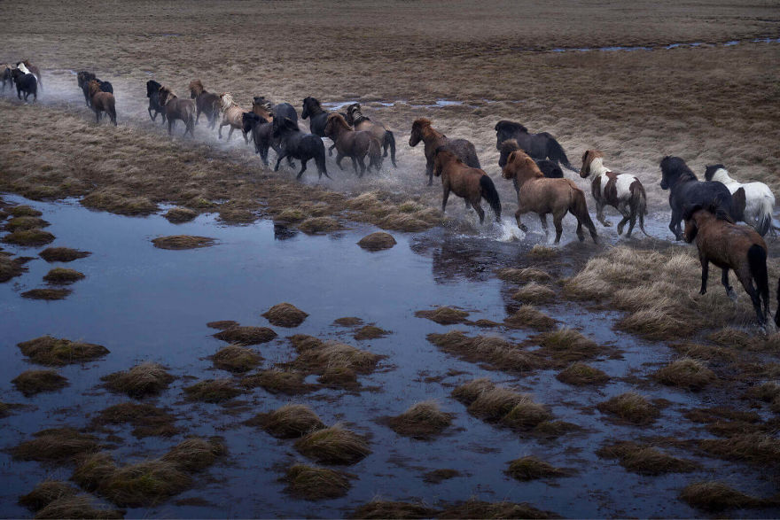 animal-photography-icelandic-horses-in-the-realm-of-legends-drew-doggett-5-5b5afbd66a094__880