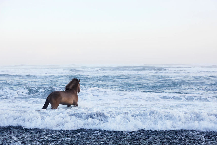 animal-photography-icelandic-horses-in-the-realm-of-legends-drew-doggett-6-5b5afbd852aa8__880