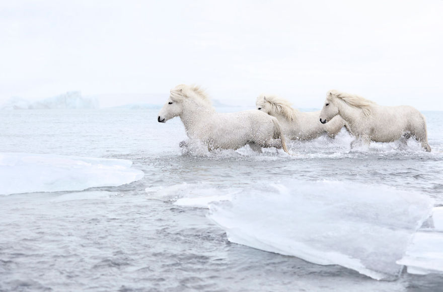 animal-photography-icelandic-horses-in-the-realm-of-legends-drew-doggett-7-5b5afbdaad0e3__880