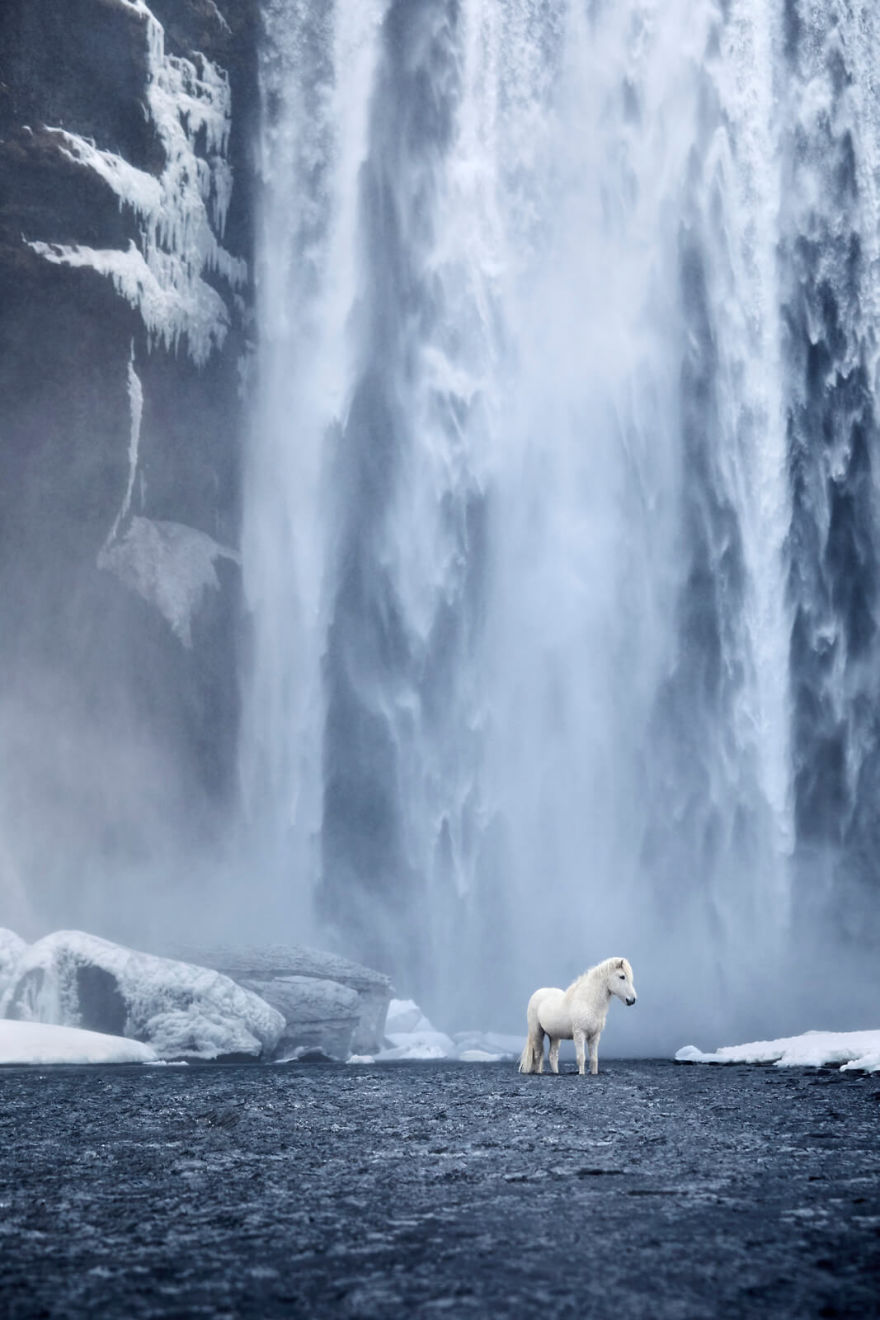 animal-photography-icelandic-horses-in-the-realm-of-legends-drew-doggett-8-5b5afbdc86a27__880