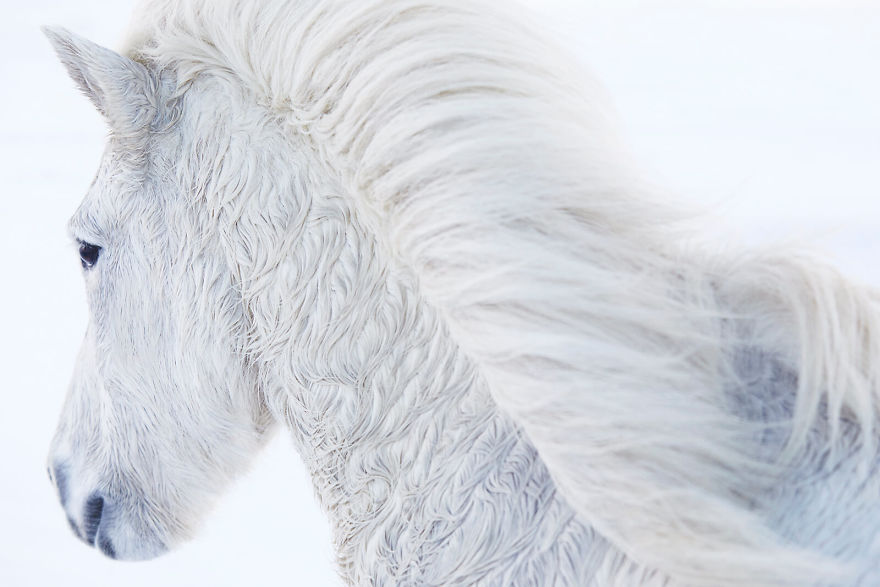 animal-photography-icelandic-horses-in-the-realm-of-legends-drew-doggett-9-5b5afbdf20ba0__880