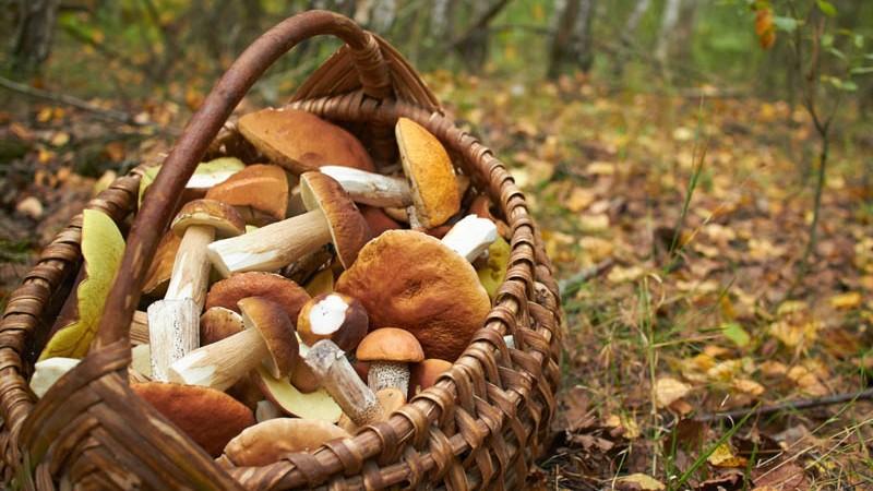 Atenție! Numărul intoxicațiilor cu ciuperci în Moldova este în creștere. Ce trebuie să faceți ca să vă protejați