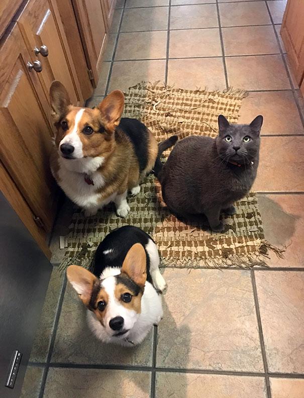 funny-hungry-dogs-begging-food-14-5b44adb45913c__605