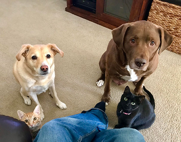funny-hungry-dogs-begging-food-8-5b44ad4214376__605