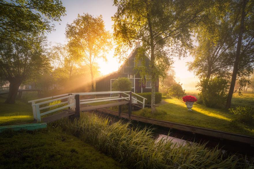olanda dimineața11