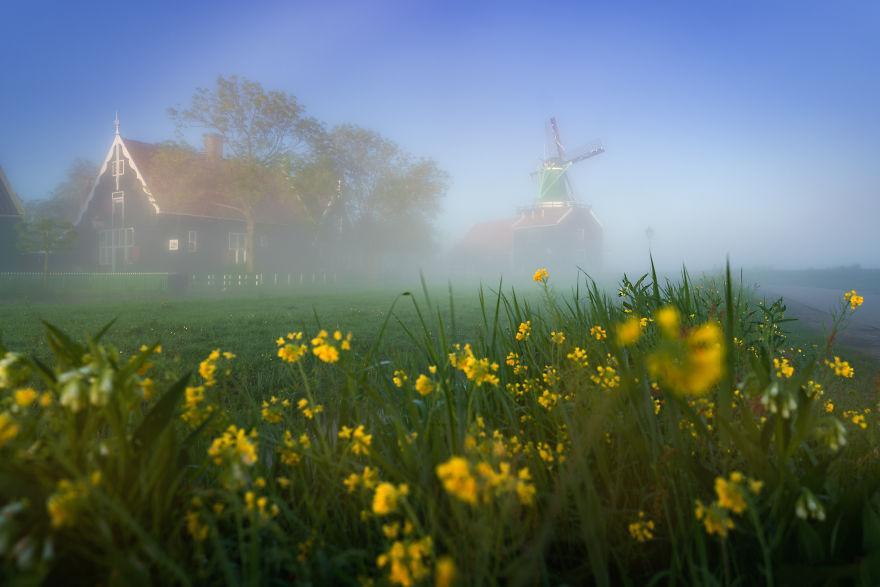olanda dimineața9