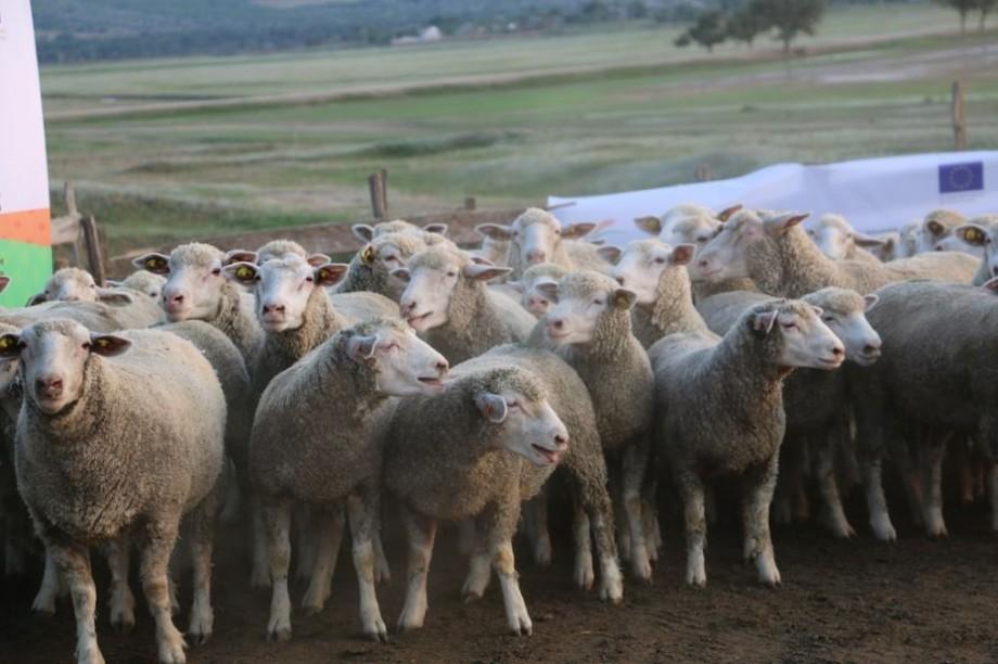 (galerie foto) Muzica clasică într-o stână de oi. Expediția La La Play a ajuns la Corten