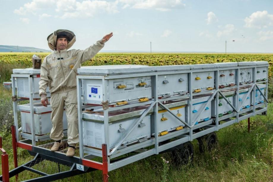 """(foto) """"Aurul lichid"""" este o afacere profitabilă. O familie din sudul țării a lansat o afacere de producere a mierii cu nuci"""