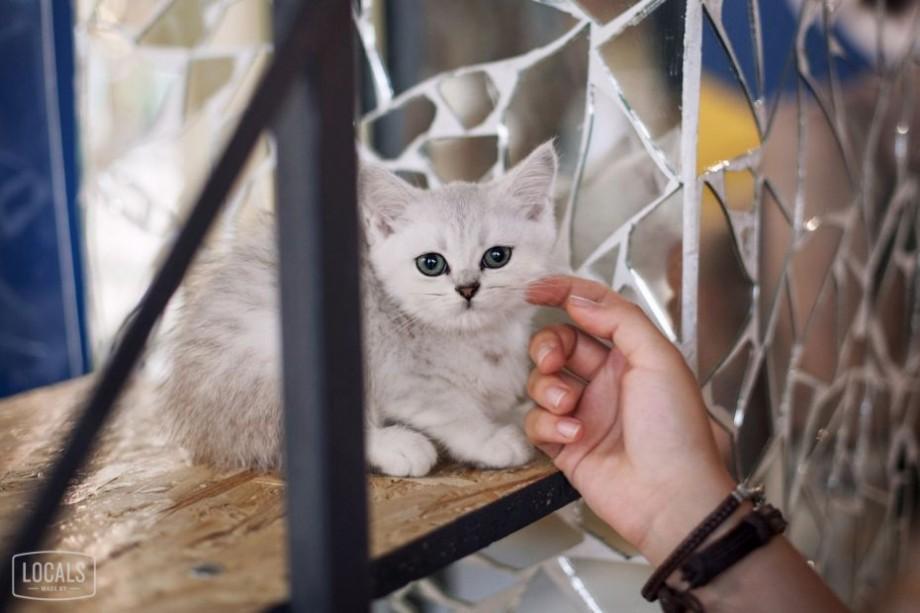 (foto) La Chișinău s-a deschis o cafenea cu pisici. Unde se află și ce poți face acolo
