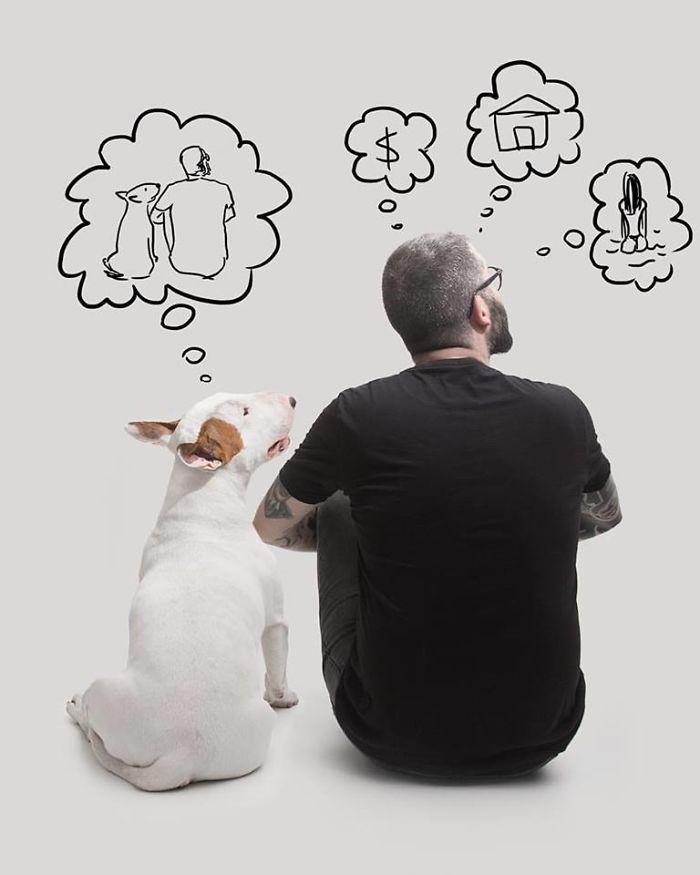 Câine și pereți albi