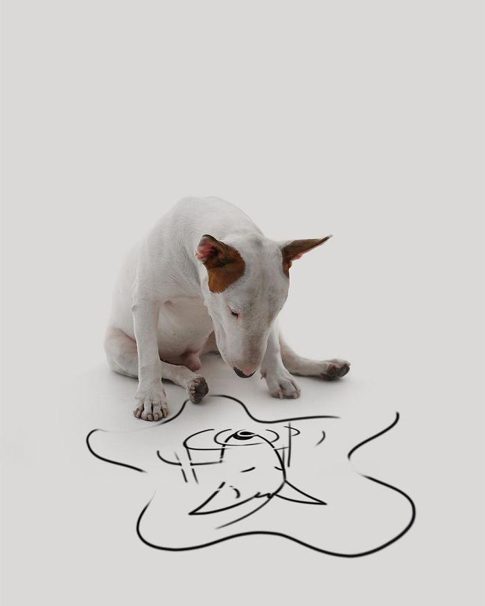 Câine și pereți albi12