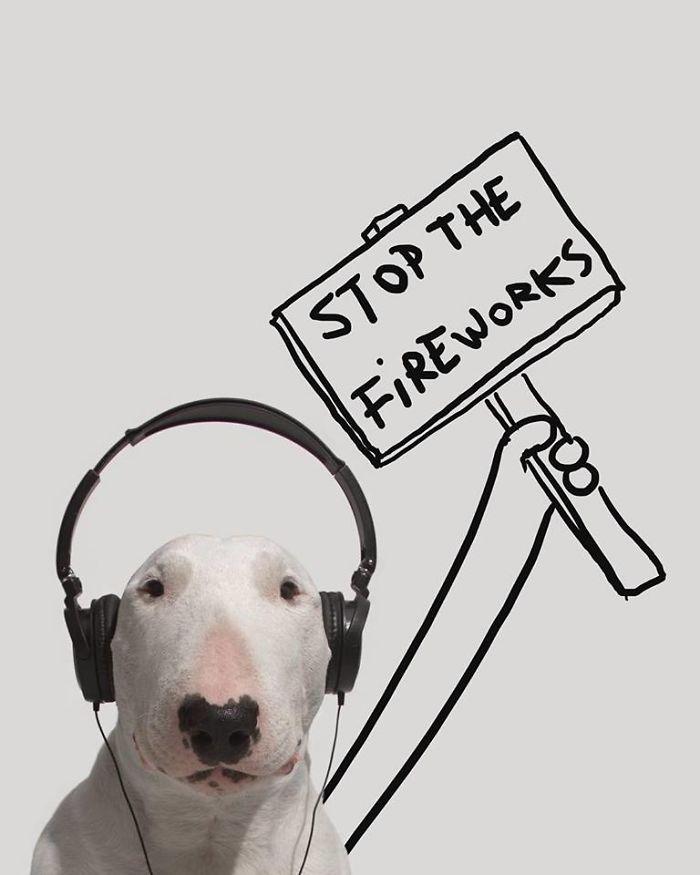 Câine și pereți albi13