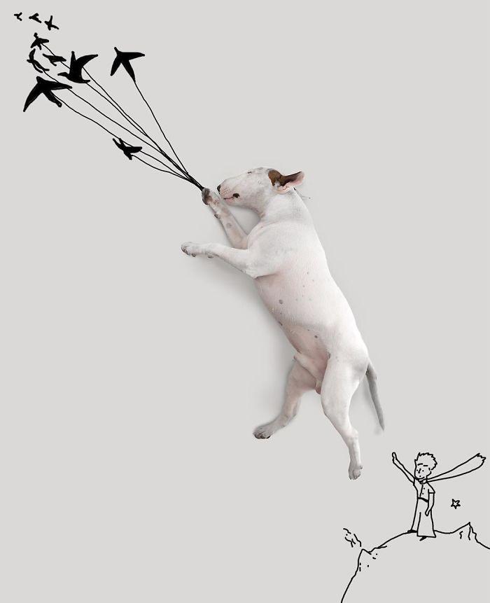 Câine și pereți albi16