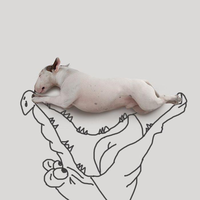 Câine și pereți albi17