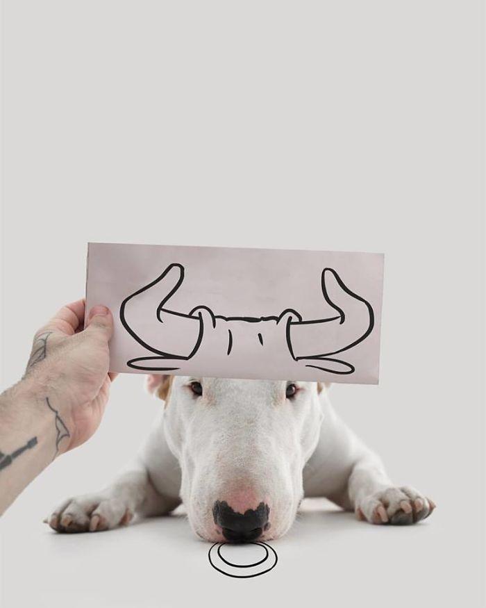 Câine și pereți albi19