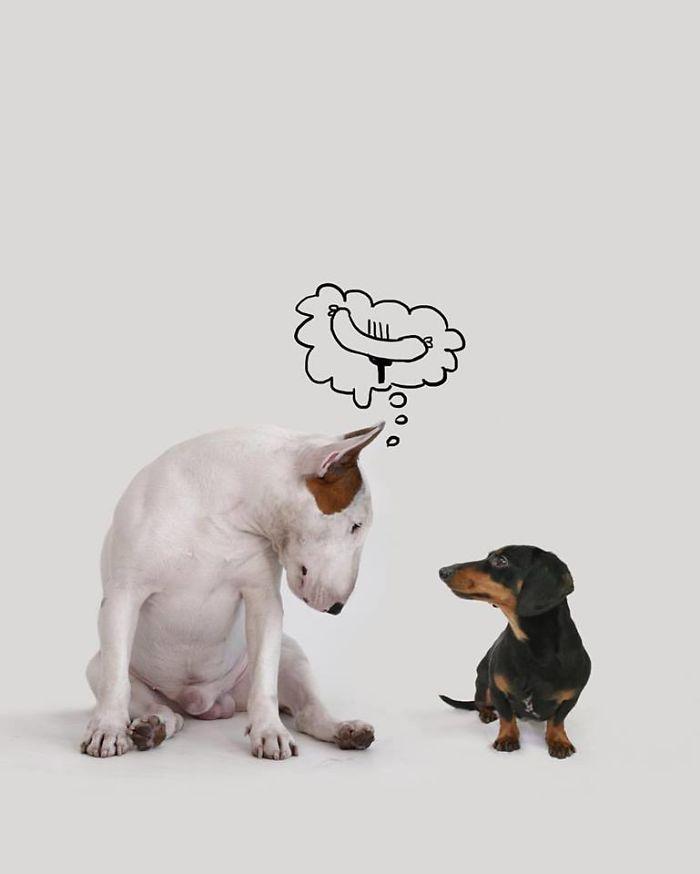 Câine și pereți albi5