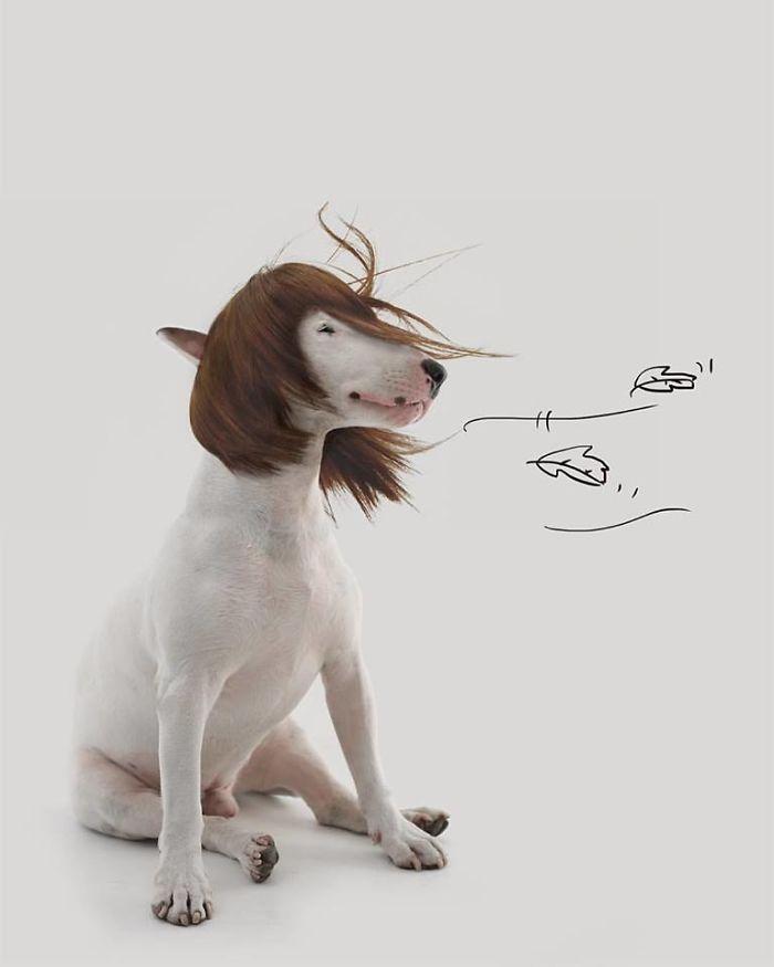 Câine și pereți albi8