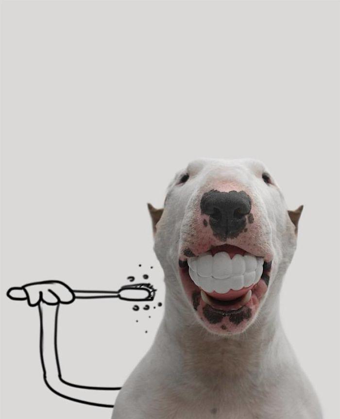 Câine și pereți albi91