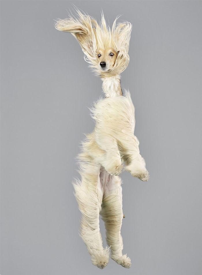 câine zubrători1