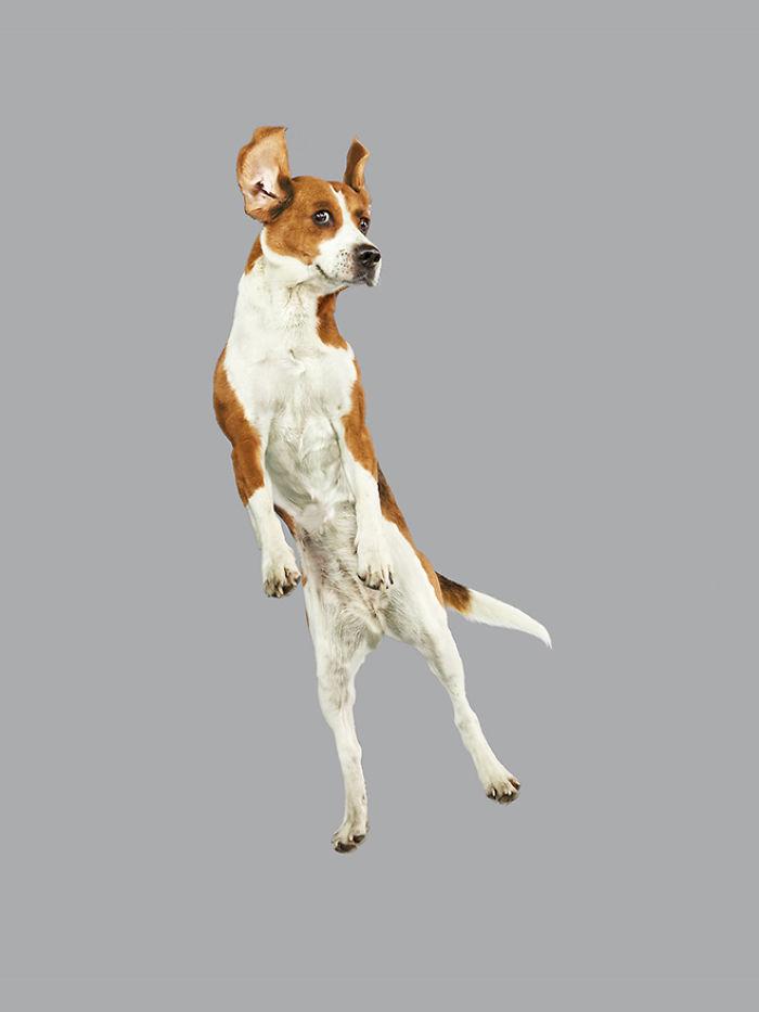 câine zubrători18