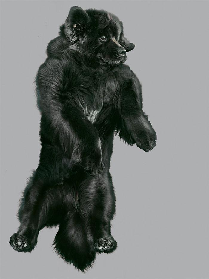câine zubrători2