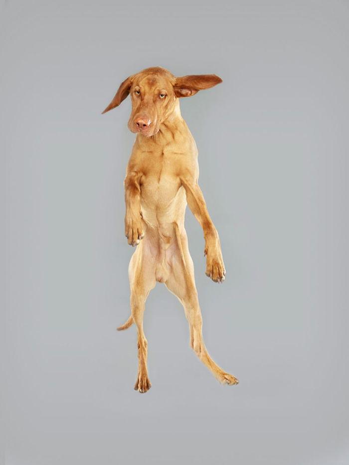 câine zubrători56
