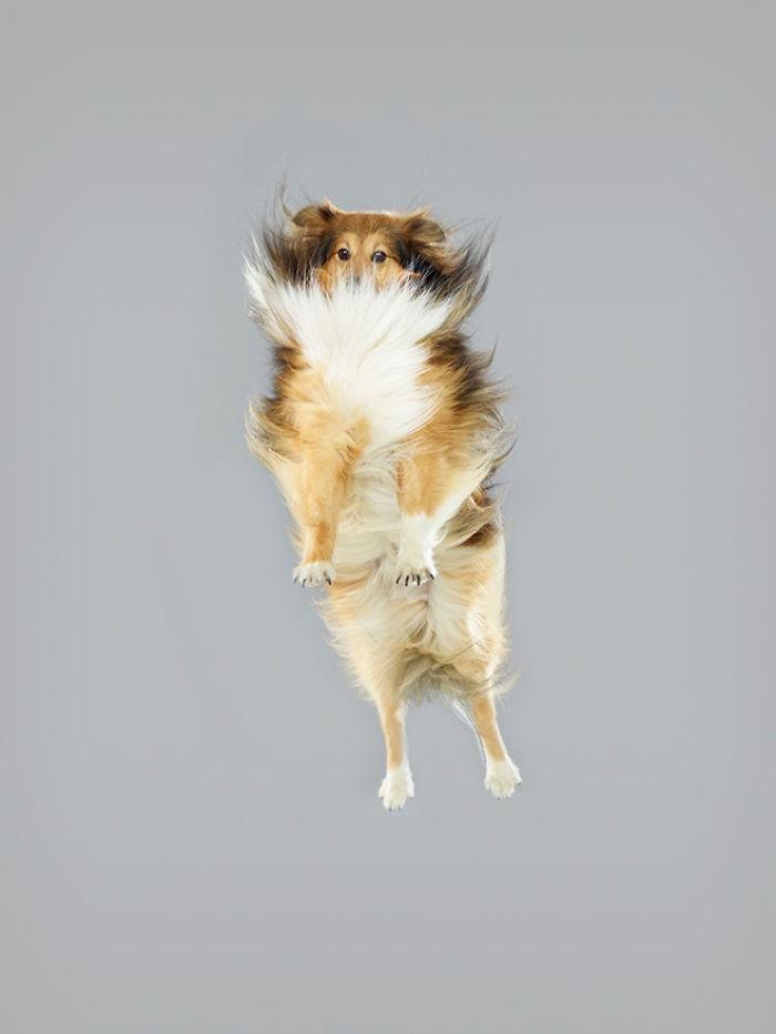 câine zubrători8