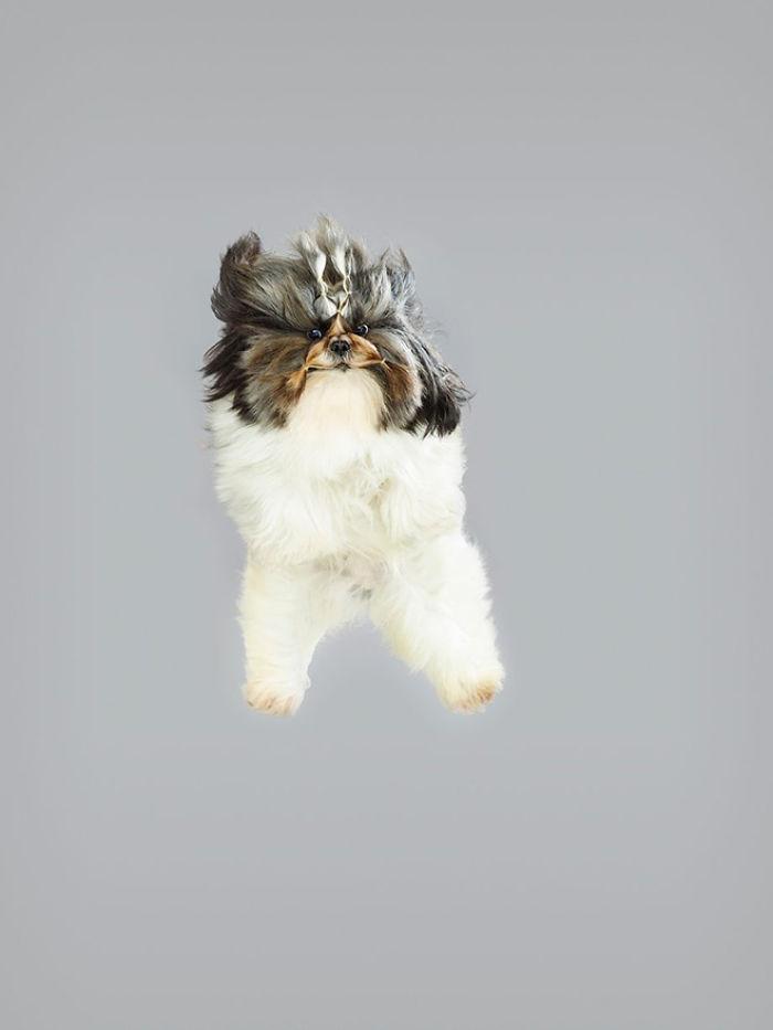 câine zubrători9