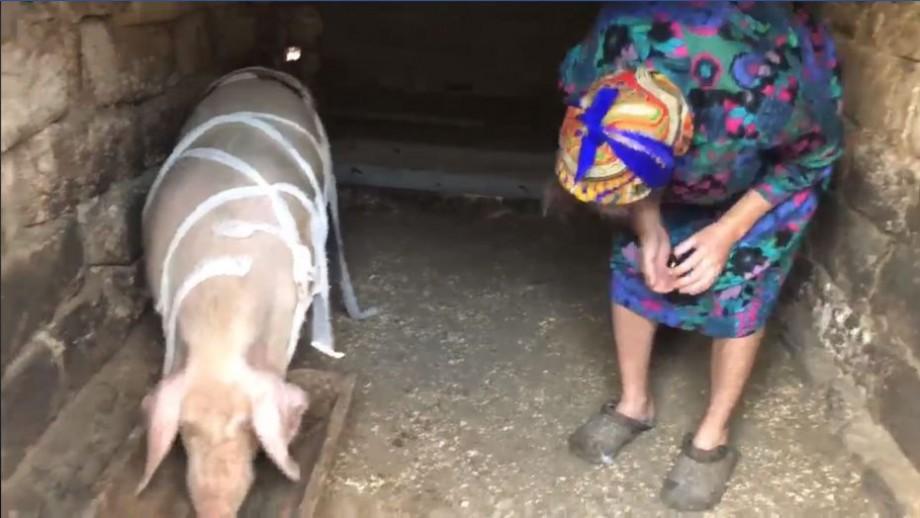 """(video) """"Porcul a fost răsturnat de găini plouate"""". Noua parodie a lui Emilian Crețu"""