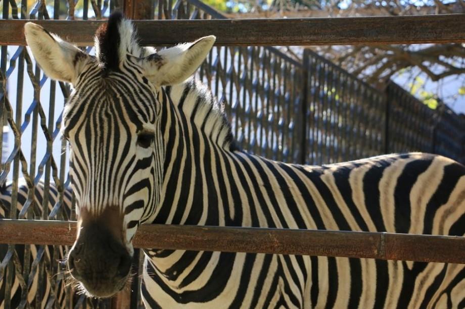 (foto) Ochii de după gratii. Cum arată privirea animalelor care își petrec viața în gradina zoologică din Capitală