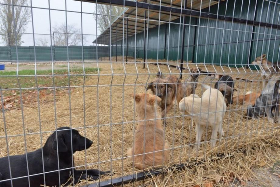 (foto) Primăria Chișinău va avea un câine de pază. Cine este patrupedul și cum puteți adopta un astfel de prieten