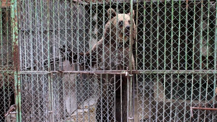 """""""Ursii ar trebui să aibă o zonă mare"""". O petiție pentru condiții mai bune de întreținere a urșilor în Grădina Zoologică din Chișinău"""