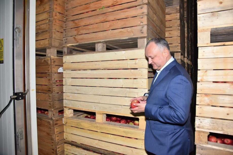 Igor Dodon promite că vor fi eliminate taxele vamale pentru exportul produselor agricole în Rusia