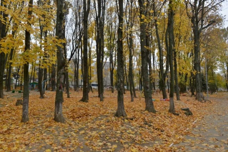 Primăria Chișinău invită locuitorii capitalei să colecteze frunzișurile din curți. Cum vă puteți implica