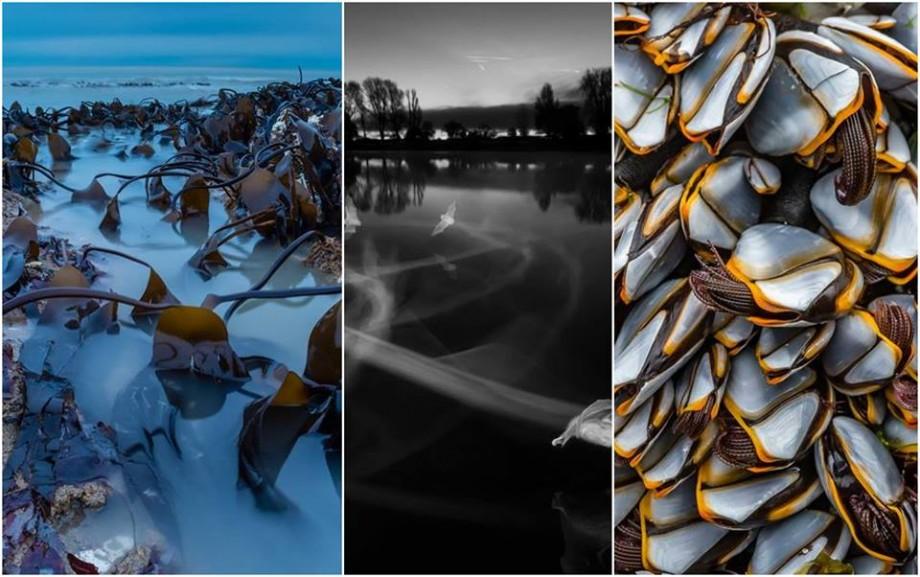 (foto) O cameră în infraroşu şi un sistem de iluminat dezvoltat timp de 14 luni. Cum arată fotografiile câștigătoare de la British Wildlife Photography Awards