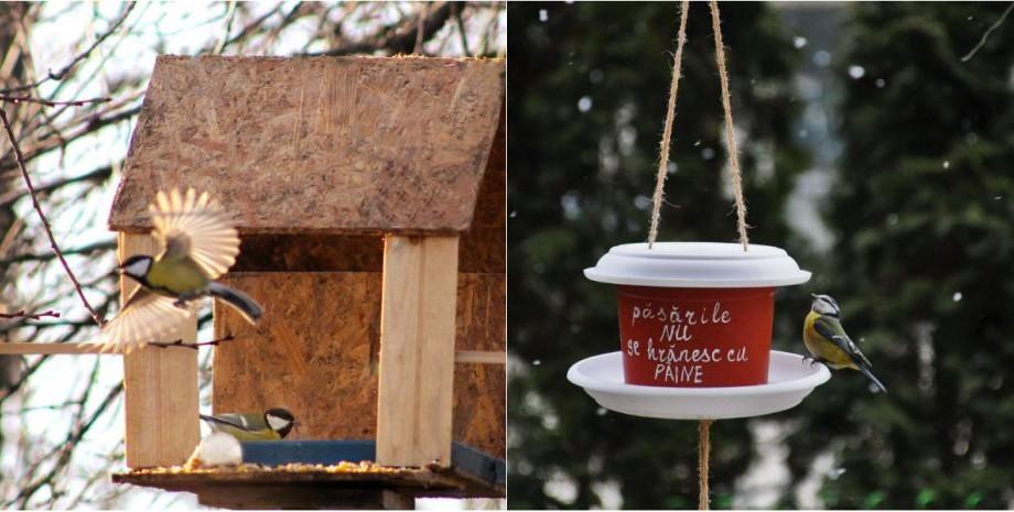 (foto) Fotografiază păsări la hrănitoare și câștigă premii. Care sunt condițiile de participare