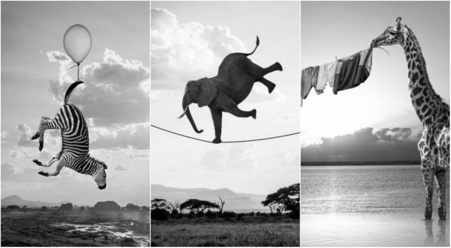 """(foto) """"Cât oamenii nu se uită"""". Un artist și-a imaginat viața animalelor sălbatice în absența ochilor curioși și a aparatelor de fotografiat"""
