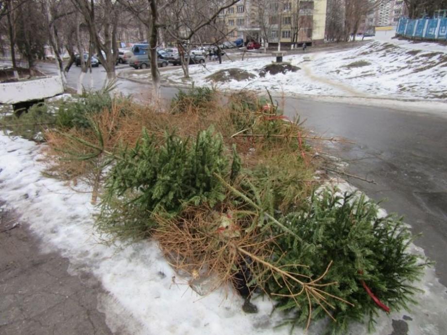 Molizii folosit în perioada sărbătorilor de iarnă sunt colectați pentru a fi reciclați. Unde pot fi depozitați
