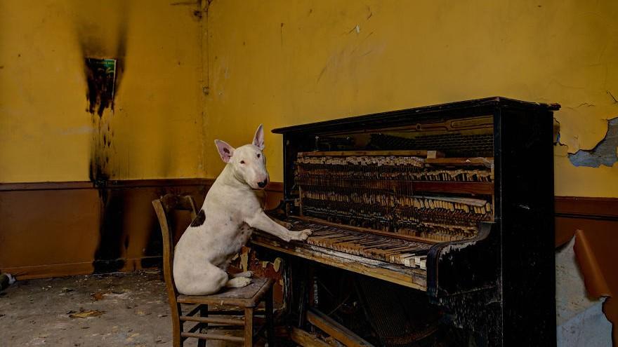 (foto) Timp de cinci ani, o fotografă olandeză a explorat locuri abandonate din Europa, alături de câinele său