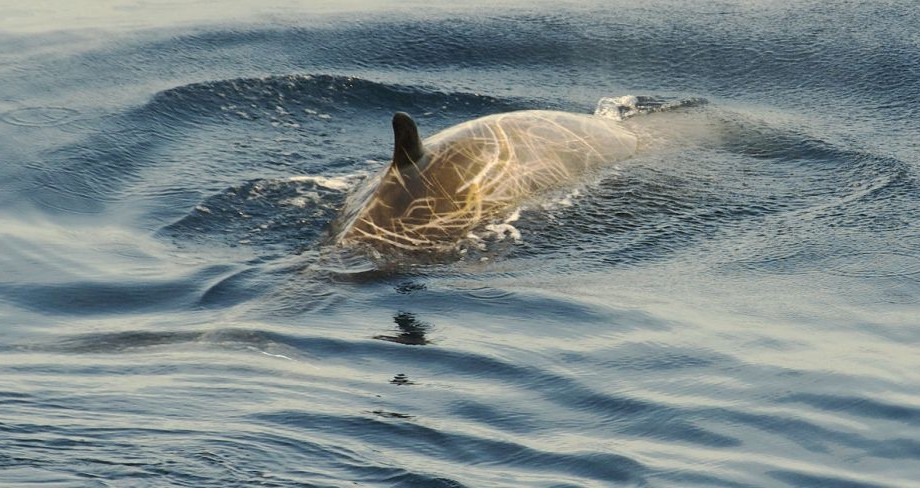 În stomacul unei balene moarte au fost găsite 40 de kilograme de plastic