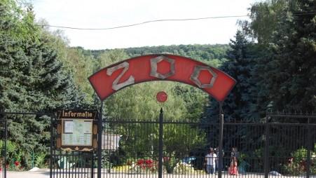 Grădină zoologică de contact la Chișinău, în premieră. Vizitatorii se vor putea juca cu mai multe animale