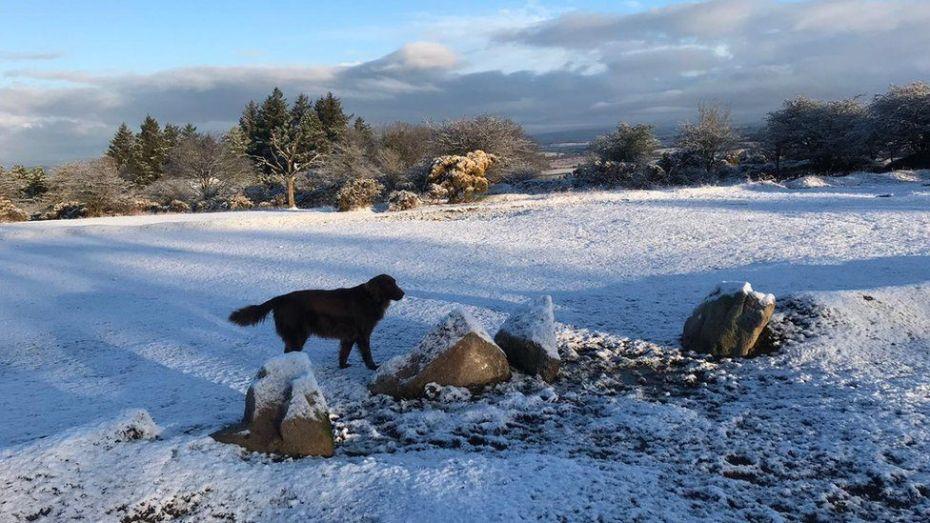 _106280999_snowdog