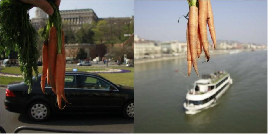 """(foto) Un artist din Moldova a lansat flashmobul """"Morcojelul"""". A fotografiat morcovii autohtoni pe mai multe fundaluri în Ungaria"""