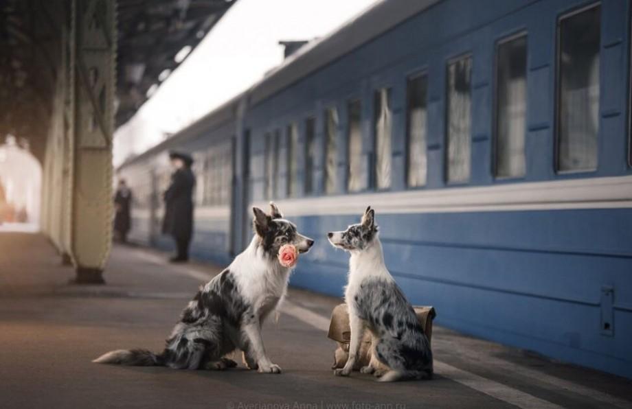 (foto) O seară romantică a unui cuplu de câini îndrăgostiți relatată printr-o serie de fotografii realizate în Sankt-Petersburg