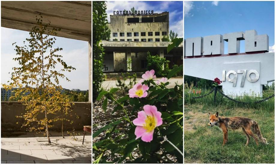 (foto) Natura a învins radiația. Cum arată vegetația din apropierea Cernobîlului în prezent