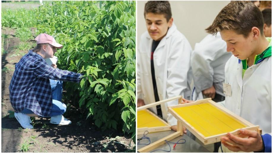 Admitere 2019. Unde în Moldova poți învăța meseria de apicultor și cultivator de pomușoare